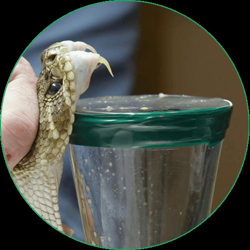 Мултимаск крем със змийска отрова - отрова от змия