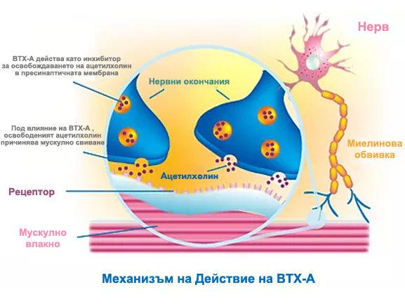 Мултимаск BTX-A